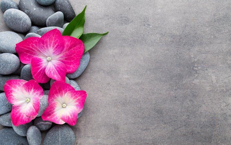 цветы, камни, спа, дзен, цветком, орхидею, булыжники, flowers, stones, spa, zen, flower, orchid