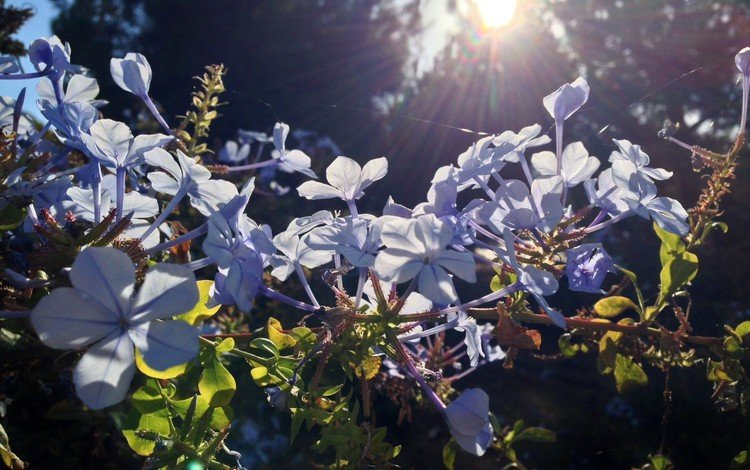 цветы, природа, растения, блики, солнечный свет, flowers, nature, plants, glare, sunlight