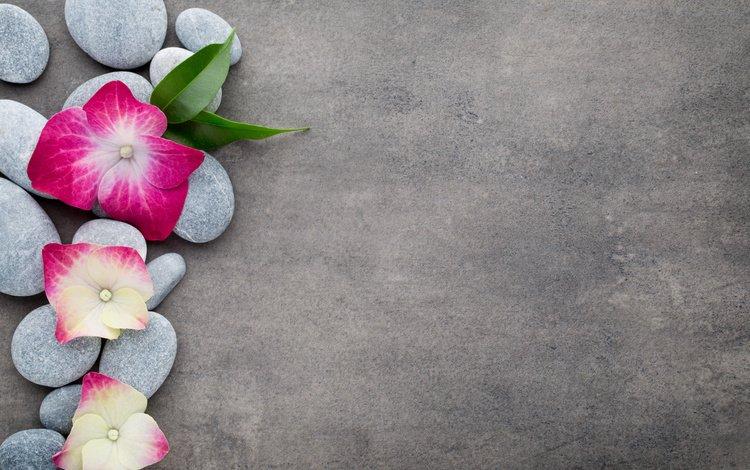 цветы, камни, спа, дзен, цветком, булыжники, дзэн, flowers, stones, spa, zen, flower