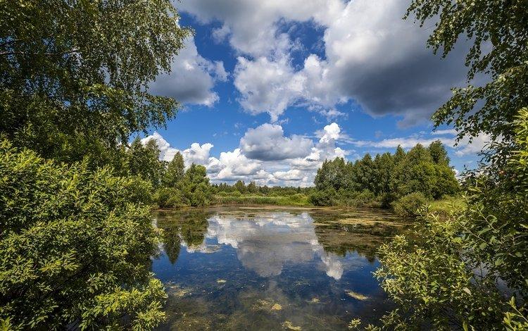 небо, облака, деревья, лето, the sky, clouds, trees, summer