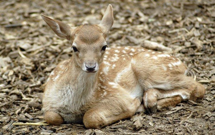 природа, олень, фон, nature, deer, background