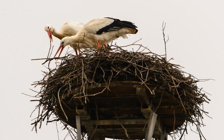 природа, птицы, гнездо, аисты, nature, birds, socket, storks