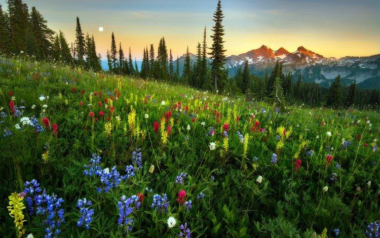 горы, луг, полевые цветы, деревь, валлпапер, mountains, meadow, wildflowers, trees, wallpaper