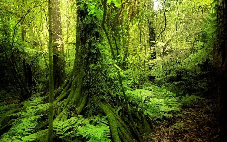 Папоротник и мох в лесу
