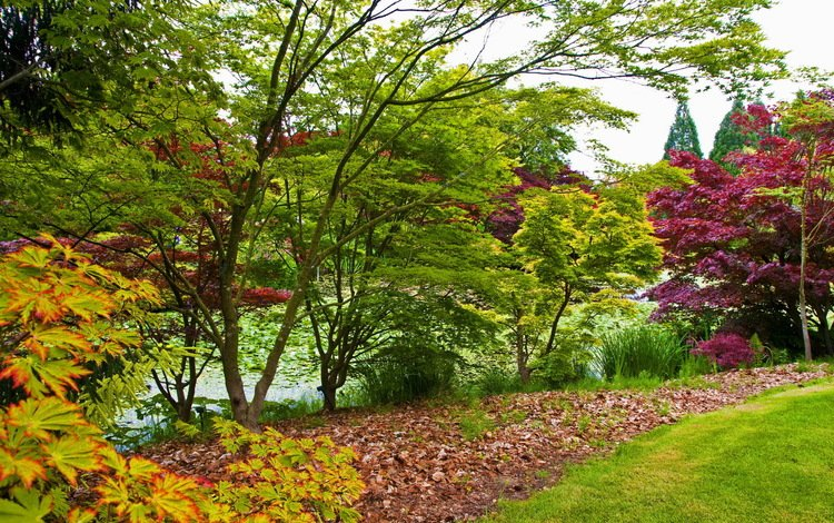 grass, trees, leaves, the bushes, garden, vancouver, pond, canada, vandusen botanical garden