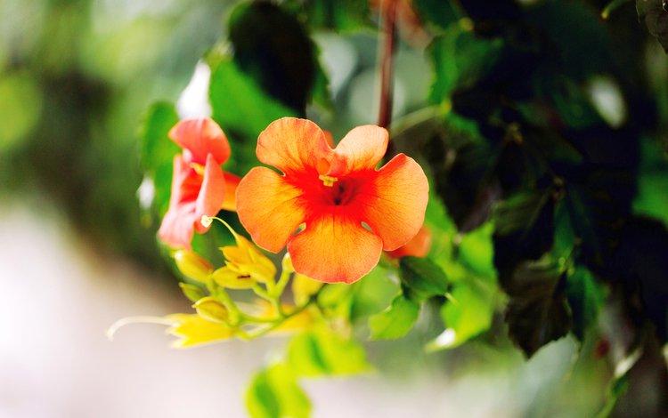цветы, листья, лепестки, flowers, leaves, petals