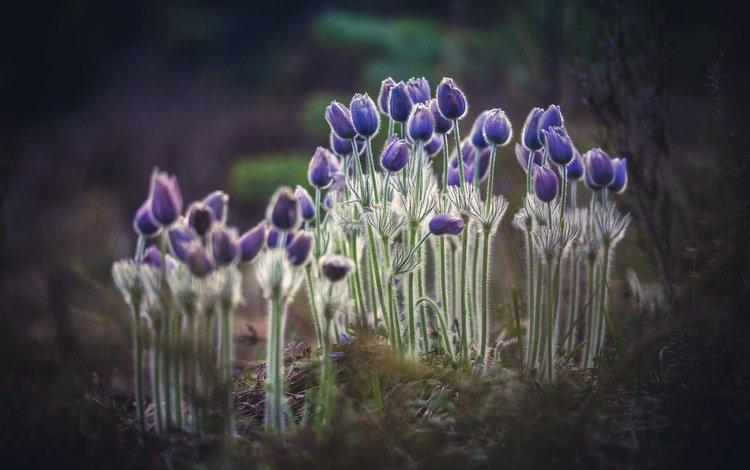 цветы, природа, фон, flowers, nature, background