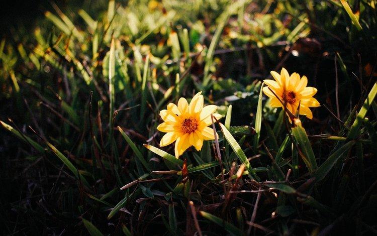 цветы, трава, лепестки, желтые, flowers, grass, petals, yellow