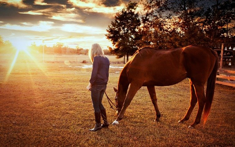 лошадь, деревья, восход, солнце, природа, девушка, horse, trees, sunrise, the sun, nature, girl