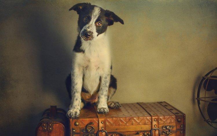 стиль, ретро, обработка, собака, щенок, чемодан, вентилятор, style, retro, treatment, dog, puppy, suitcase, fan