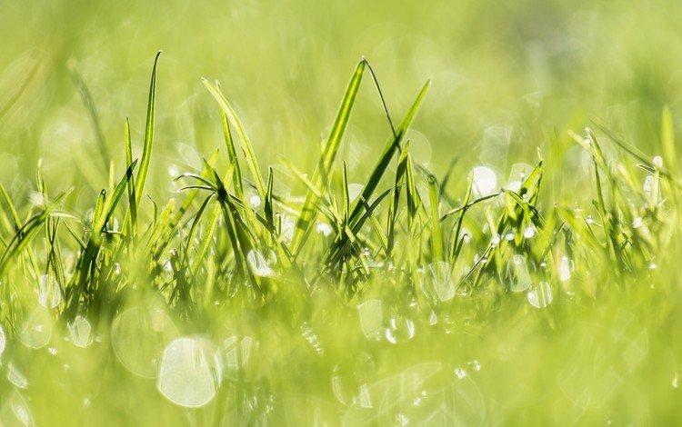 свет, трава, природа, растения, зелёный, заводы, на природе, грин, легкие, light, grass, nature, plants, green
