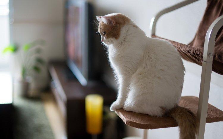 кошка, дом, уют, cat, house, comfort