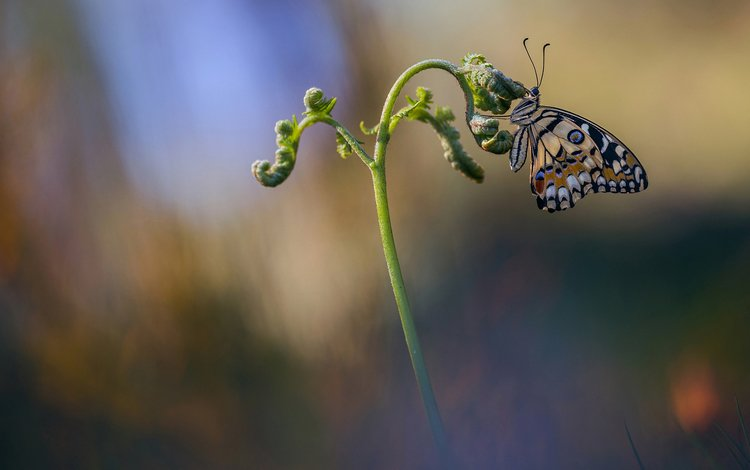 макро, насекомое, бабочка, растение, macro, insect, butterfly, plant