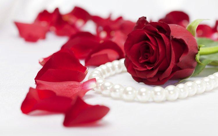цветок, роза, лепестки, ожерелье, жемчуг, flower, rose, petals, necklace, pearl