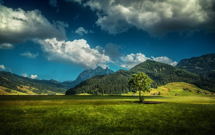grass, clouds, mountains, tree, forest, field, houses, switzerland