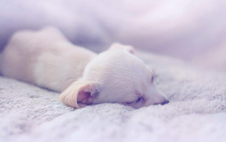 собака, дом, щенок, уют, dog, house, puppy, comfort