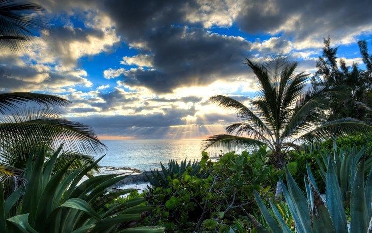 вода, солнце, тучи, лучи, море, пальмы, алоэ, water, the sun, clouds, rays, sea, palm trees, aloe