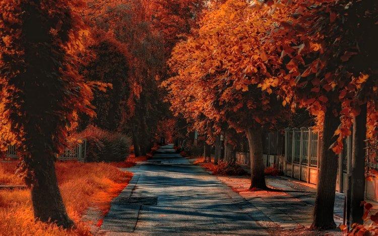 дорожка, осень, обработка, тропинка, улица, опадают, осен, track, autumn, treatment, path, street, fall