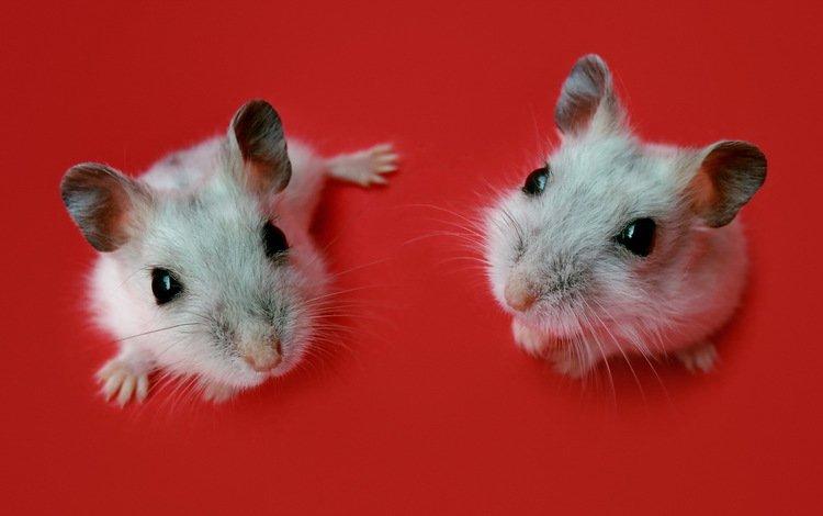 фон, цвет, мышь, мыши, мышки, background, color, mouse