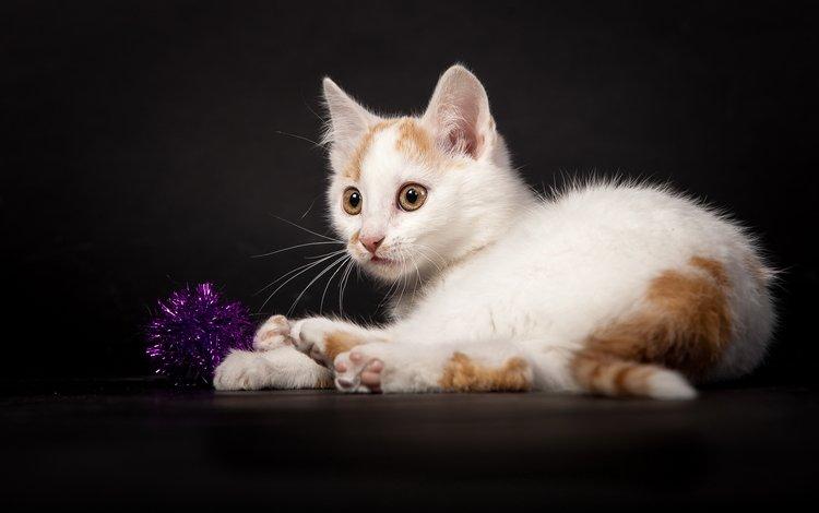 кошка, котенок, белый, темный фон, игра, мишура, cat, kitty, white, the dark background, the game, tinsel