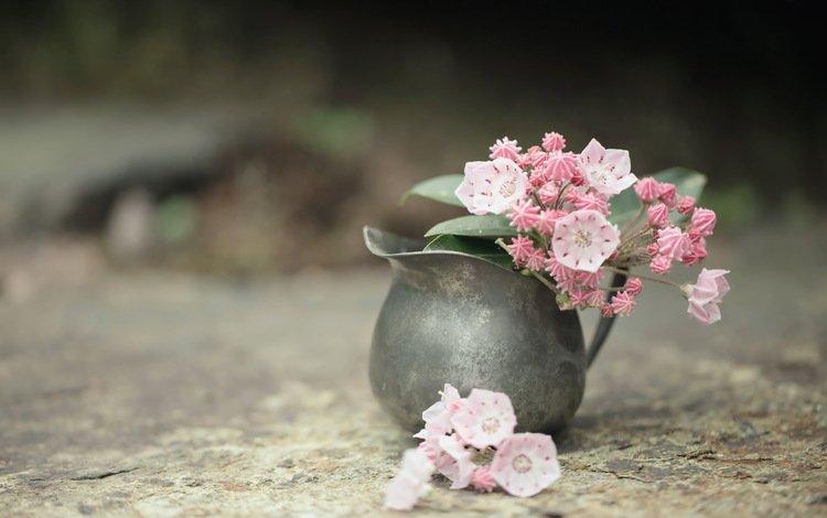 цветы, фон, ваза, flowers, background, vase
