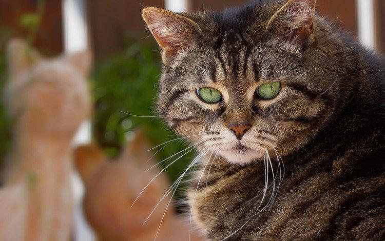 кот, усы, кошка, взгляд, уши, зеленые глаза, cat, mustache, look, ears, green eyes