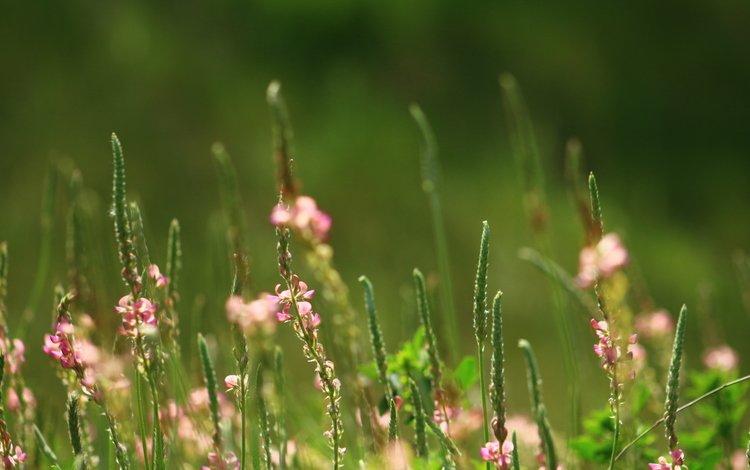 кеды трава цветы бесплатно