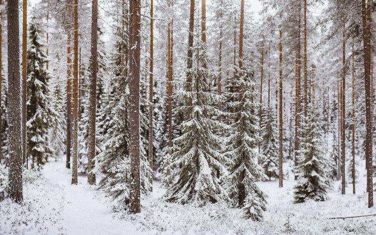 деревья, снег, лес, зима, trees, snow, forest, winter