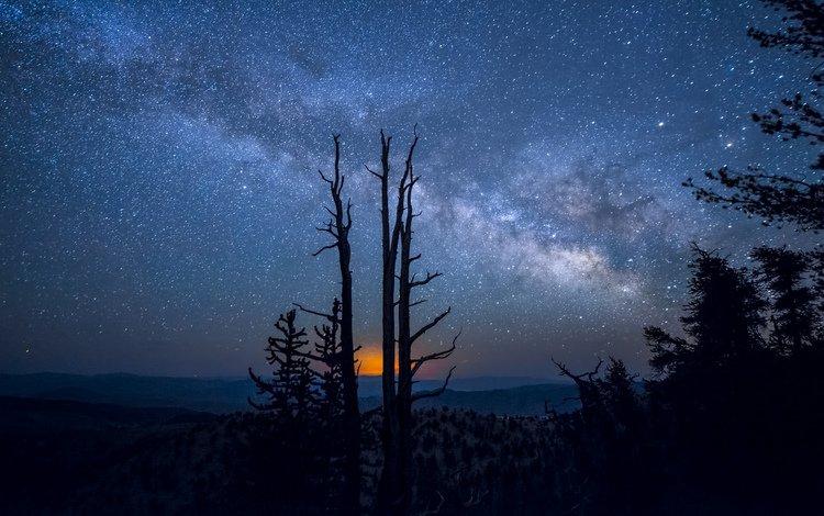 деревья, природа, млечный путь, ночь звезды, trees, nature, the milky way, night star