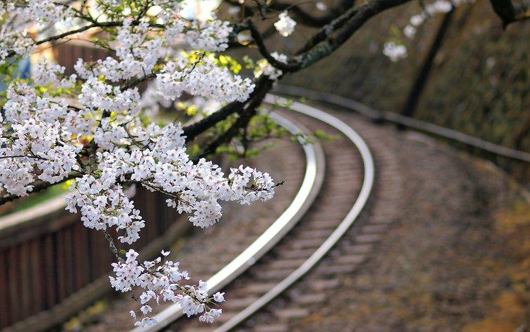 цветы, железная дорога, дерево, макро, ветки, япония, размытость, сакура, flowers, railroad, tree, macro, branches, japan, blur, sakura