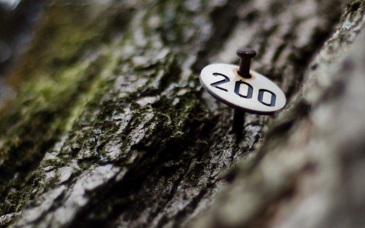 tree, macro, nail, moss, bark, room, 200