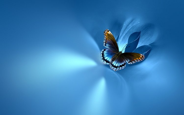 background, butterfly, blue