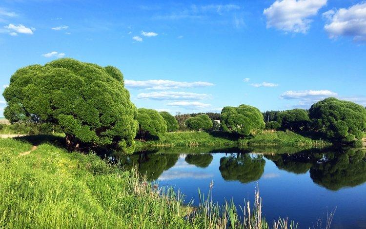 небо, трава, деревья, озеро, природа, лето, the sky, grass, trees, lake, nature, summer