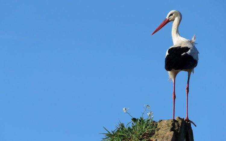 небо, птица, аист, the sky, bird, stork