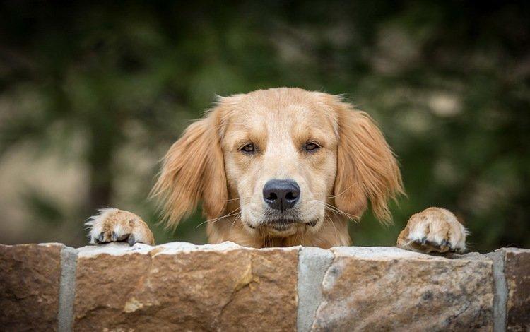 мордочка, взгляд, собака, друг, muzzle, look, dog, each