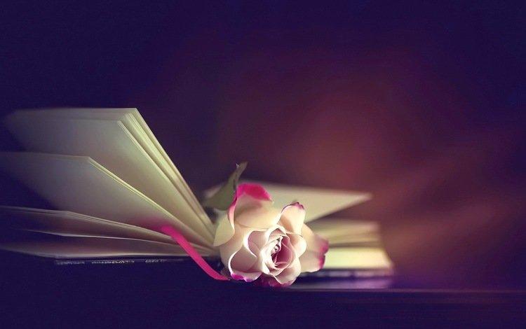 background, flower, rose, book