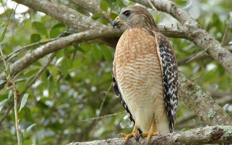 взгляд, птица, сокол, взор, look, bird, falcon, eyes
