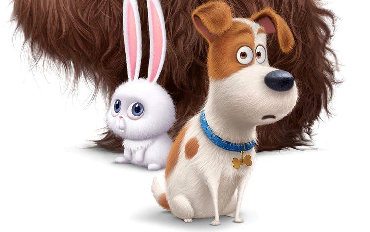 dog, cartoon, movie, hare, cute, 2016, the secret life of pets, the secret life of animals