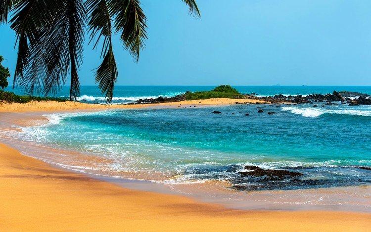 море, пляж, лето, пальмы, отдых, тропики, sea, beach, summer, palm trees, stay, tropics