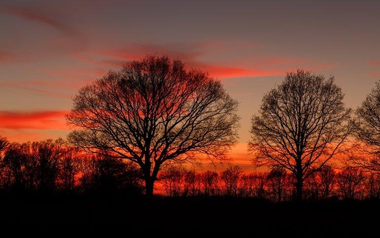 деревья, закат, ветки, силуэты, сумерки, деревь, dusk, полумрак, ветками, trees, sunset, branches, silhouettes, twilight