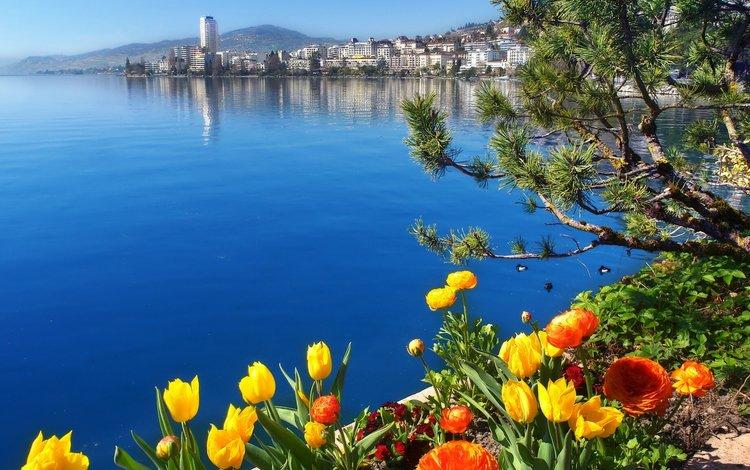 цветы, озеро, швейцария, женевское озеро, монтрё, flowers, lake, switzerland, lake geneva, montreux