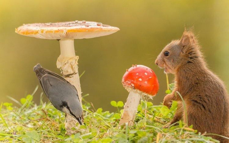 трава, природа, животные, грибы, птица, белка, grass, nature, animals, mushrooms, bird, protein