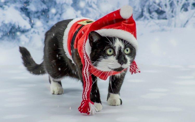 новый год, кот, костюм, сказка, фотосессия, зеленоглазый, new year, cat, costume, tale, photoshoot, green-eyed
