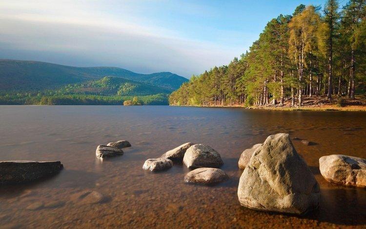 вода, камни, берег, лес, water, stones, shore, forest
