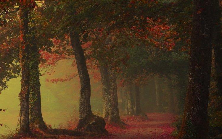 туман, аллея, fog, alley