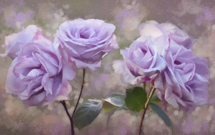 цветы, розы, лепестки, живопись, flowers, roses, petals, painting