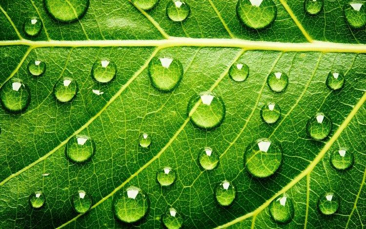 вода, грин, текстура, капли, цвет, лист, прожилки, листик, зеленый лист, water, green, texture, drops, color, sheet, veins, leaf, green leaf