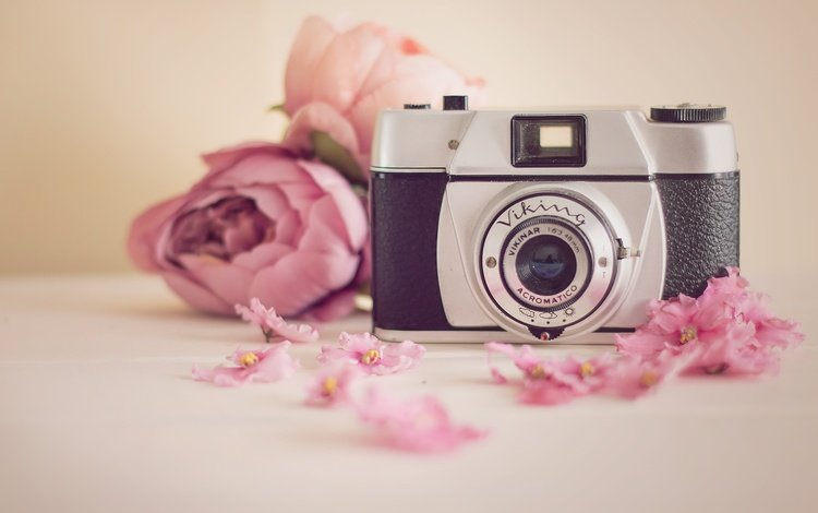 flowers, camera, viking