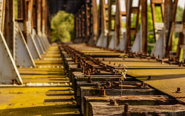railroad, sleepers, bridge, rostock, tree