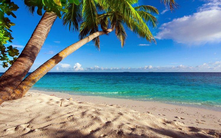 море, песок, пляж, пальмы, отдых, тропики, круиз, sea, sand, beach, palm trees, stay, tropics, cruise